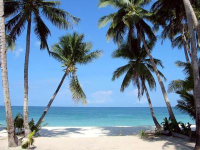 http://www.lakbaypilipinas.com/images/boracay_palm_trees1.jpg