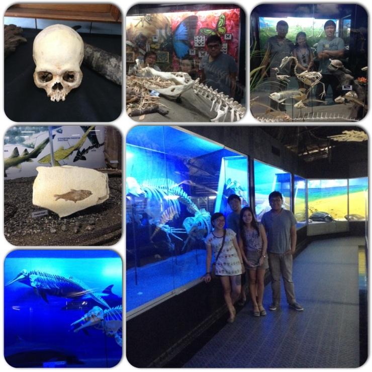 D' Bone Museum